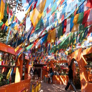 darjeeling-footsteps-of-the-buddha-tcef